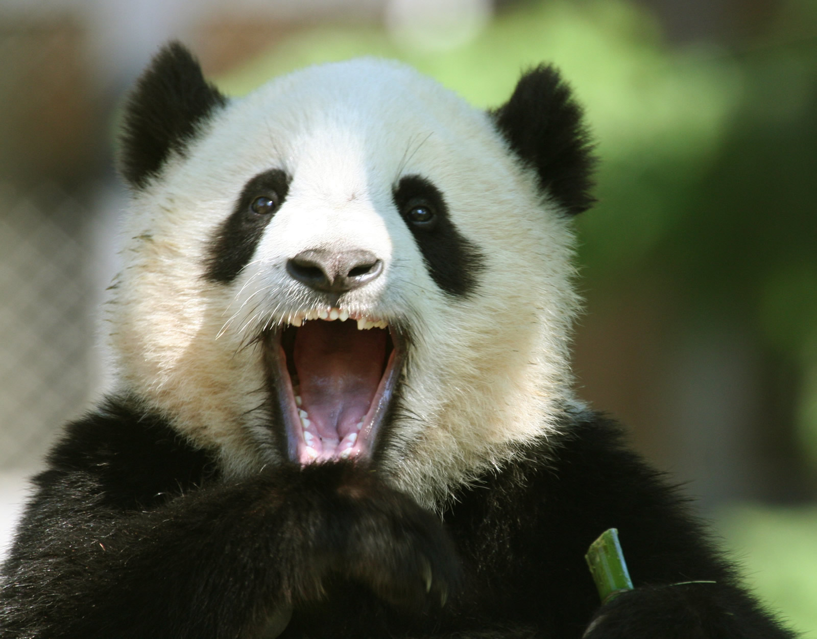 How Google's Panda 4.0 Update Affects Personal Search Results