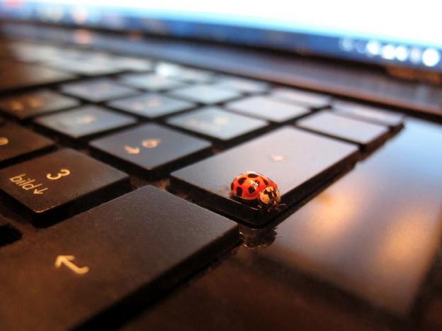 Bug on Computer