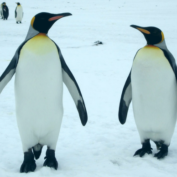 Learn Your Animals: Google Releases Penguin 3.0